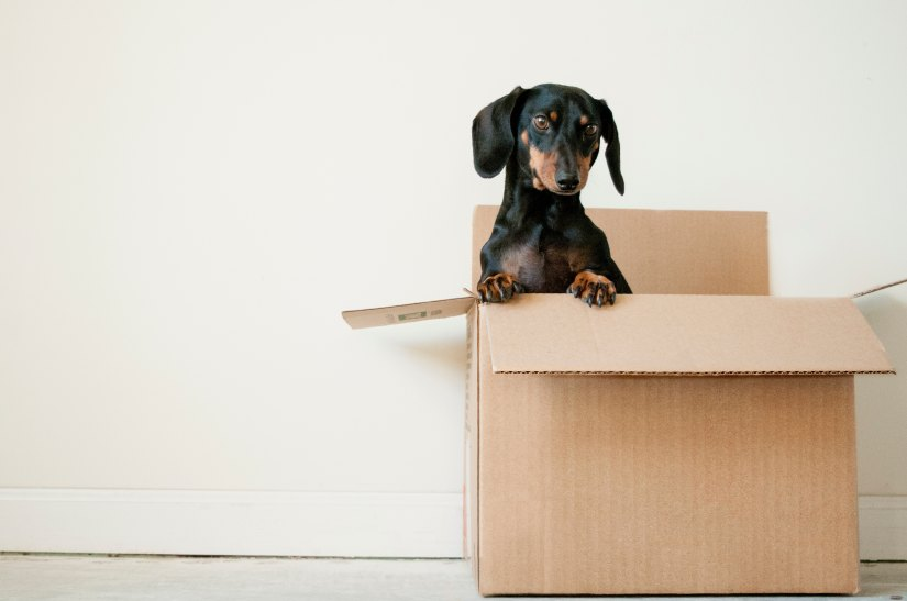 Dog in brown packing box for moving house